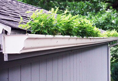 Gutter Cleaning Myths