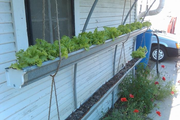 lettuce gutters